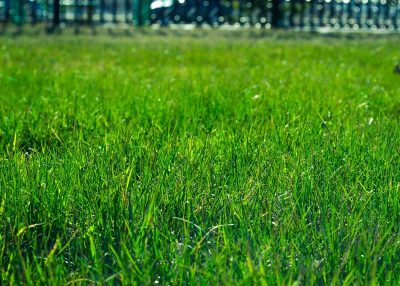 lawn-installation